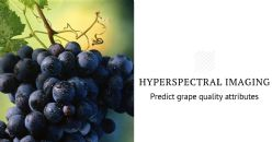 Application of Vis–NIR Hyperspectral Imaging for prediction of flavonoids, anthocyanins and soluble solids content in table grapes