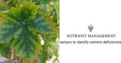High resolution sensors to help vineyard growers identify nutrient deficiencies