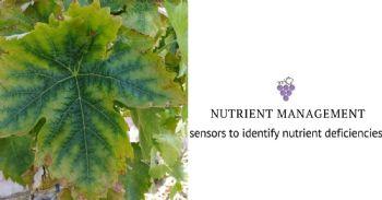 High resolution sensors to help vineyard growers identify nutrient deficiencies