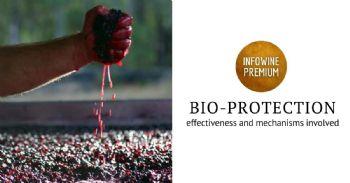La bioprotección en enología: ¿una alternativa real a los sulfitos?