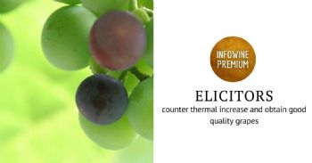 Facing climate change: effects of inactivated yeast extracts on the ripening of cv. Sangiovese