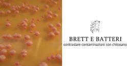 Contrastare le contaminazioni da Brett e batteri con specifici chitosani