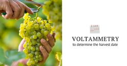 Use of linear sweep voltammetry to determine the harvest date of Sauvignon blanc plots