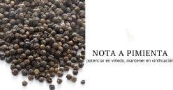 Rotundona, nota de especiaria proveniente da vinha