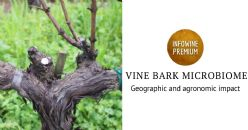 Bark and grape microbiome of Vitis vinifera: impact of geographic patterns and agronomic management