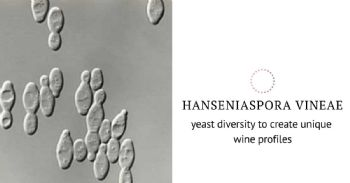 The oenological potential of Hanseniaspora vineae yeast strains to industrial wine production