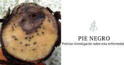 Investigación sobre las enfermedades de la madera en el viñedo recibe el premio a la innovación de la PTV
