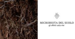 Webinar Gratuito - Il microbioma del suolo per aumentare efficienza e resilienza della vite
