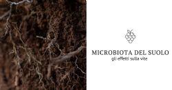 microbiota del suolo