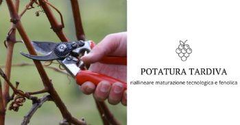 Effetti della potatura tardiva sulla maturità tecnologica e fenolica nella cultivar Merlot