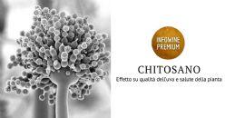 Approfondimento molecolare e biochimico sull'applicazione di chitosano su Vitis vinifera
