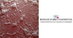 Biofilm di Brettanomyces e loro resistenza ai detergenti