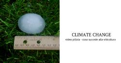 Cambiamento climatico e l'ecosistema microbiologico in vigneto