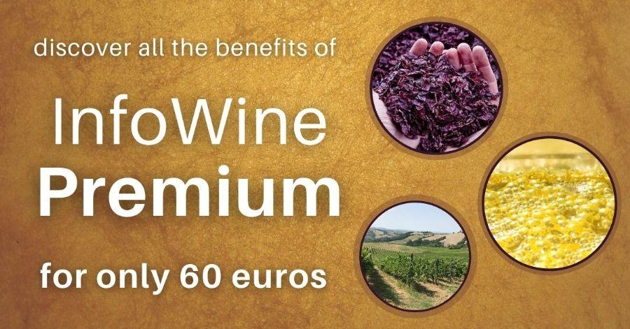 IW Premium