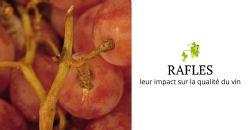 Revue de presse: une étude sur la composition des rafles et leur impact sur la qualité du vin