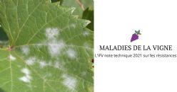 Note technique 2021 sur les résistances aux maladies de la vigne