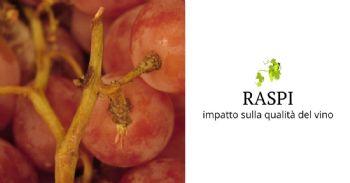 Rassegna stampa: Composizione dei raspi e loro impatto sulla qualità del vino