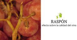 Abstract científico: Composición del raspón y su impacto en la calidad del vino