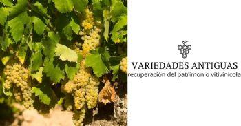 Rescatan antiguas variedades de viña de la Comunidad de Valencia próximas a la desaparición