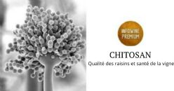 Enquête moléculaire et biochimique sur l'application du chitosan sur Vitis vinifera
