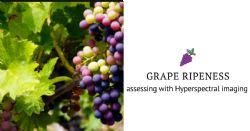 Wine grape ripeness assessment using Hyperspectral imaging