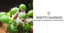 Strategie innovative di contenimento degli insetti dannosi della vite