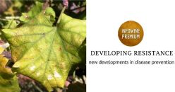 Resistenza di V. vinifera a flavescenza dorata, Plasmopara viticola e Botrytis cinerea