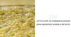 Nuovissimo attivante di fermentazione integrale e 100% organico
