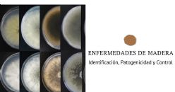 Enfermedades de madera de la vid en Albariño. Identificación, Patogenicidad y Control Biológico de los hongos causantes del Decaimiento por Botryosphaeria