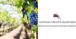 Molecular and biochemical insight upon chitosan application on vitis vinifera L. CV. Touriga Franca and Tinto Cao