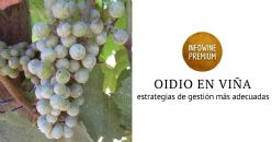 Oídio na vinha | Gestão da vinha para um conjunto de soluções