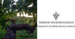 Il microbioma di bacca e corteccia in Vitis vinifera: bio-geografia ed effetto delle pratiche agronomiche
