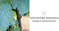 Strategia di riduzione del rame per il sangiovese in viticoltura biologica