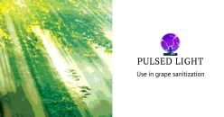 Use of Pulsed Light for Grape Sanitization