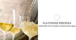 Routine measurement of flavonoid phenols related to astringency and premature aging of white wines, and technical consequences