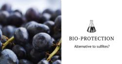 Bio-protection in oenology: a real alternative to sulfites?