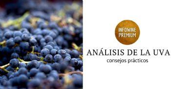 La importancia de la selección de uva en la elaboración de vinos de calidad