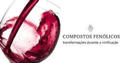Oenobook 11 e os compostos fenólicos da uva e do vinho, uma história de sabor e cor – 2ª parte