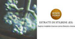 Duplice modalità d'azione contro Botrytis cinerea degli estratti di tralci di vite