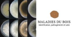 Maladies du bois de la vigne d'albariño. Identification, pathogénicité et lutte biologique des champignons responsables du deperissement botryosphaérique