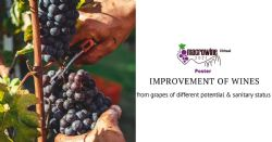 Winemaking options for the improvement of the attributes of the wines from grapes with different oenological potential and sanitary status