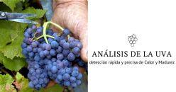 Detección rápida y precisa del Color del futuro vino y de la Madurez Fenólica de la uva
