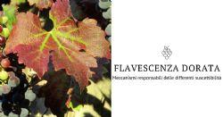 Studio dei meccanismi responsabili delle differenze di suscettibilità delle varietà di vite alla Flavescenza dorata