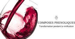Oenobook 11 et les composés phénoliques du raisin et du vin, une histoire de saveurs et de couleurs - Partie II