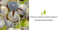 Powdery mildew, downy mildew, and botrytis diseases forecasting to increase vine cultivation sustainability