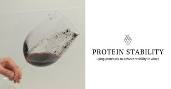 Using proteases to achieve protein stability in wines