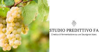 Studio predittivo della cinetica fermentativa su uve Sauvignon blanc