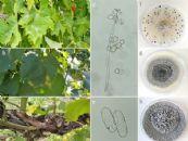 Saúde das plantas: uma abordagem fitossanitária sustentável