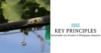 The sustainable use of water in Winegrape vineyards