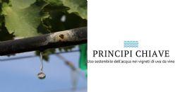 Uso sostenibile dell'acqua nei vigneti di uva per la vinificazione